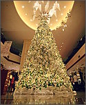 content/attachments/11783-marco-polo-tree-hope.jpg